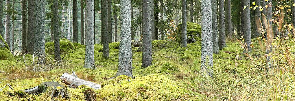 etta_skog1
